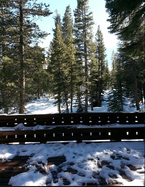View from the front door of our cabin for the previous three years. It's beautiful, I know! I just hate the cold.